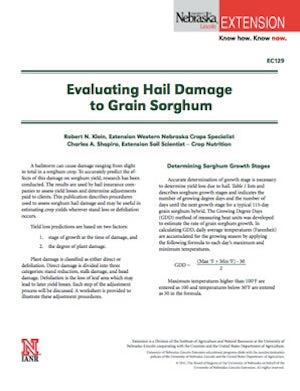 Evaluating Hail Damage to Grain Sorghum