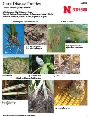 Corn Disease Profiles: Diseases Favored by Dry Conditions (EC1910)