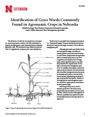 Identification of Grass Weeds Commonly Found in Agronomic Crops in Nebraska (ec3020)