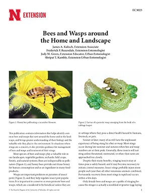 Bees and Wasps around the Home and Landscape (EC3023)