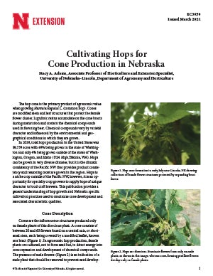 Cultivating Hops for Cone Production in Nebraska