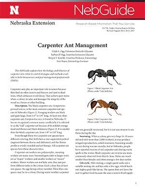 Carpenter Ant Management