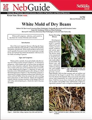 White Mold of Dry Beans