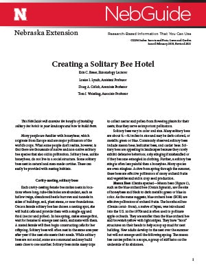 Creating a Solitary Bee Hotel
