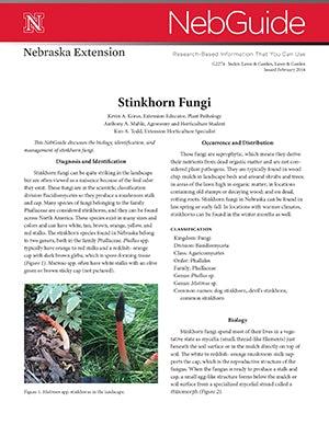 Stinkhorn Fungi (G2274)