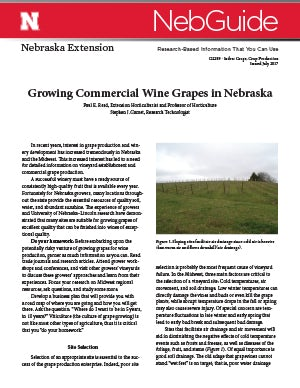 Growing Commercial Wine Grapes in Nebraska (g2289)